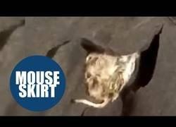 Enlace a ¿Pero esto qué es? Una madre encuentra un ratón cosido en el uniforme escolar de su hijo