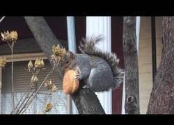 Enlace a La felicidad de esta ardilla comiéndose un donut mientras andaba sentadita en el tronco del árbol