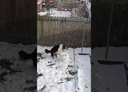 Enlace a Llegó el día de nieve y este perro no se resiste a hacer su propio muñeco de nieve