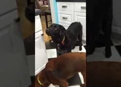Enlace a Misión imposible es lo de este perro intentando comer zanahorias