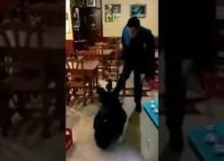 Enlace a Graban como un Guardia Urbano de Lleida le pega a un hombre tirado en el suelo en un bar