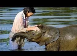Enlace a Haciendo perder el miedo por el agua a este bebé de elefante