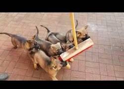 Enlace a Los perritos estos tienen un curioso ¿amigo?