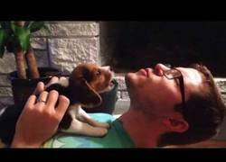 Enlace a Así de adorable es como aprende este bebé de Beagle a aullar por primera vez