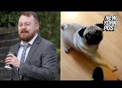 Enlace a Declaran culpable a este tipo por enseñarle el saludo nazi al perro de su novia