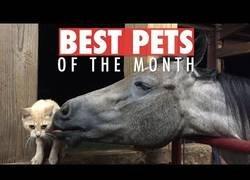 Enlace a Las mascotas más adorables que se han dado a conocer en marzo