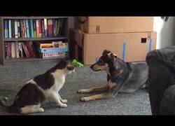 Enlace a Perro contra gato en modo diversión