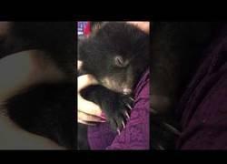 Enlace a El adorable sonido que emite este bebé de oso al abrazarse a esta presentadora de televisión