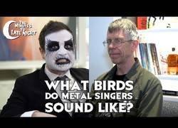 Enlace a Pajaritos que suenan como cantantes de Heavy Metal
