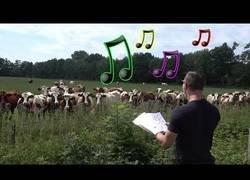 Enlace a Concierto para vacas en mitad del campo