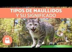 Enlace a Así hablan los gatos