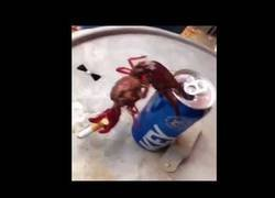 Enlace a La nueva adicción de los cangrejos es darle a los cigarrillos