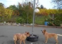 Enlace a Este perro es el más crack jugando al Tetherball