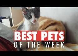 Enlace a Los animales más bonicos que hemos conocido esta semana