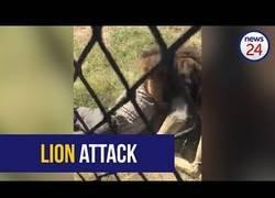 Enlace a El brutal ataque de un león a un hombre que se metió en su recinto