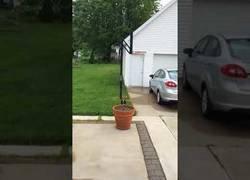 Enlace a Este perrito juega al escondite cuando aparece su dueño