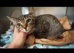 Enlace a Razones para adoptar un gato