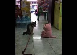 Enlace a Gato ataca a su nuevo juguete