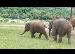 Enlace a Elefante jugando al fútbol con su mejor amigo