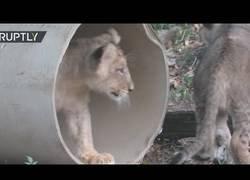 Enlace a Un aperitivo refrescante para los animales de este zoo