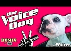Enlace a Este perro está causando auténtica sensación en todo el mundo por cantar