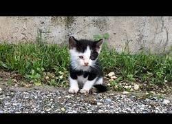 Enlace a Rescatando un gatito callejero
