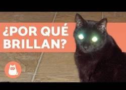 Enlace a ¿Por qué brillan los ojos de los gatos?