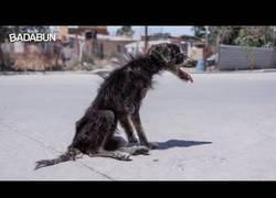 Enlace a La durísima vida de un perro callejero: la atacaron otros perros y vivía en pésimas condiciones, hasta que la rescatan y le dan un hogar seguro