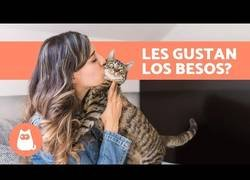Enlace a ¿A los gatos les gustan los besos?