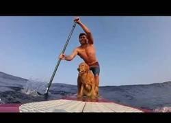 Enlace a Nada mejor que practicar surf con tu perrete