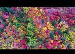 Enlace a La magia de los bosques de Utah cuando llega el otoño