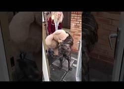 Enlace a Perro ilusionado con su nuevo peluche