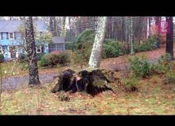 Enlace a Epic Trees falling compilation because of Natural Disasters