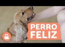 Enlace a ¿Cómo hacer más feliz a tu perro?