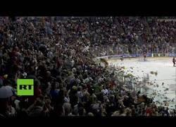 Enlace a Catarata de peluches inunda una pista de hockey y bate un récord