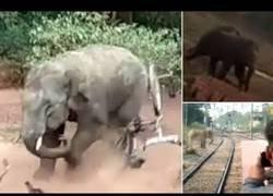 Enlace a Elefante furioso arremete contra una aldea
