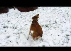 Enlace a Perros vs nieve, la recopilación más tierna