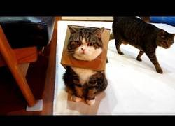 Enlace a El gato y su caja