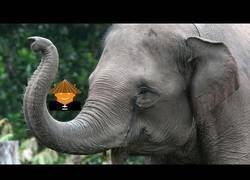 Enlace a ¿Qué pasa con los elefantes?