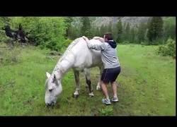 Enlace a Hombre intenta montar un caballo salvaje