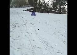 Enlace a Perrito deslizándose por la nieve