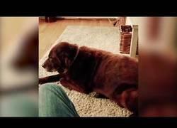 Enlace a Gato vomita al oler el pedo del perro