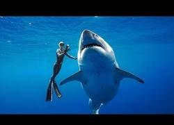 Enlace a Nadando junto a un enorme tiburón blanco localizado cerca de las costas de Miami