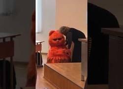 Enlace a Acude a clase disfrazado de Garfield y se gana el cariño de la profesora
