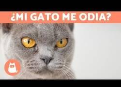 Enlace a Señales de que te odia tu gato