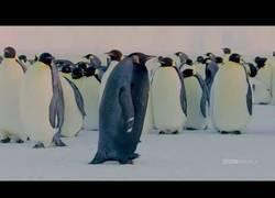 Enlace a El pingüino más raro del mundo