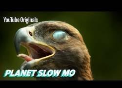 Enlace a El vuelo de aves en super slow motion es algo maravilloso