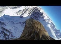 Enlace a El impresionante punto de vista de este águila sobrevolando los alpes suizos