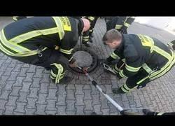 Enlace a Movilizado todo el equipo de bomberos para desatascar a una rata obesa que no podía salir del agujero de una alcantarilla