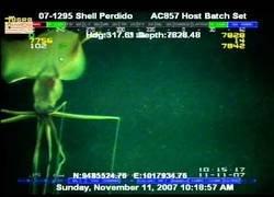 Enlace a El raro calamar encontrado en el fondo del océano más profundo de la Tierra